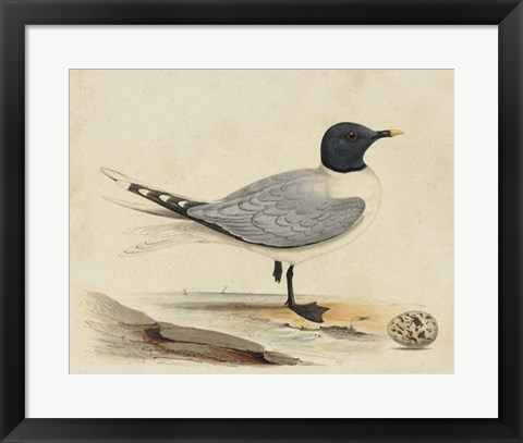Framed Meyer Shorebirds I Print
