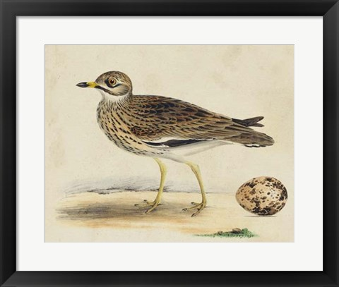 Framed Meyer Shorebirds IV Print