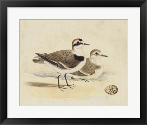 Framed Meyer Shorebirds V Print