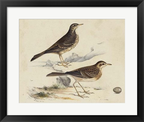 Framed Meyer Shorebirds VI Print