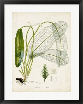 Framed Tropical Grass II Print