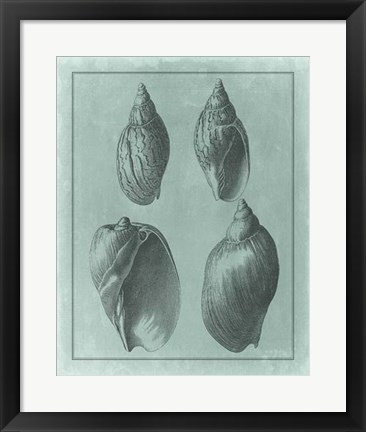 Framed Spa Shell Collection III Print
