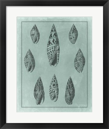 Framed Spa Shell Collection IV Print