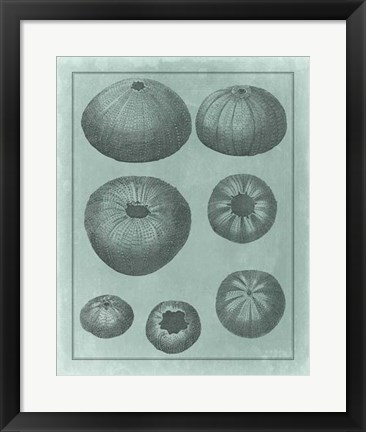 Framed Spa Shell Collection V Print