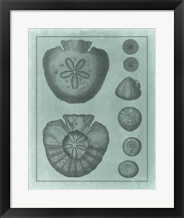 Framed Spa Shell Collection VI Print