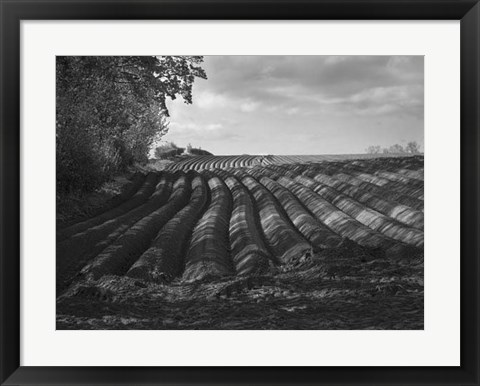 Framed Furrows Print