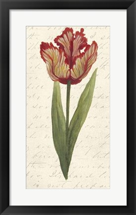 Framed Twin Tulips II Print
