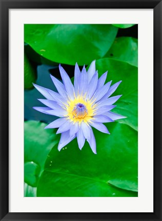 Framed Lily Flower at Wat Chalong temple Phuket, Thailand Print