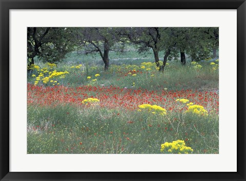 Framed Rural Landscape and Wildflowers, Cappadocia, Turkey Print