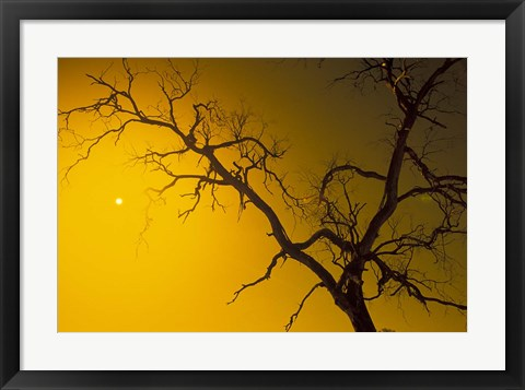 Framed Tree, Outback, Australia Print