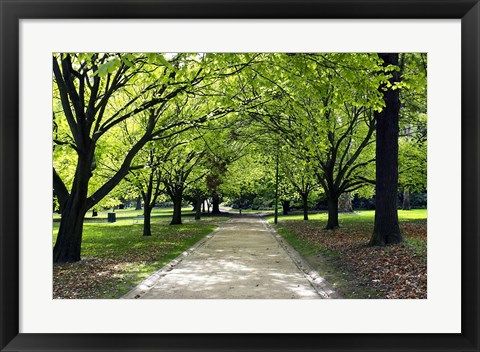 Framed Pathway and Trees, Kings Domain, Melbourne, Victoria, Australia Print