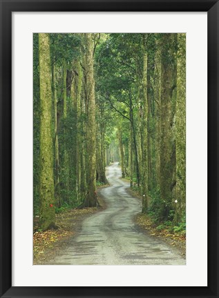 Framed Road through Rainforest, Lamington National Park, Gold Coast Hinterland, Queensland, Australia Print