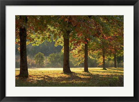 Framed Australia, New South Wales, Khancoban, Autumn Print