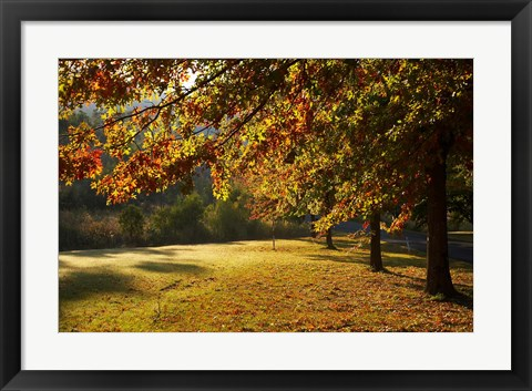 Framed Autumn Trees in Khancoban, Snowy Mountains, New South Wales, Australia Print