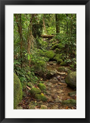 Framed Stream, Wooroonooran National Park, North Queensland, Australia Print