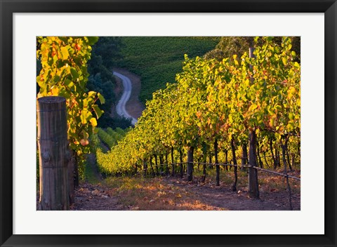Framed Australia, Adelaide Hills, Summertown vineyard Print