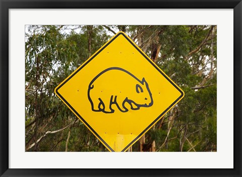 Framed Wombat warning sign, Tasman Peninsula, Australia Print
