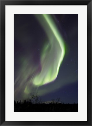 Framed Aurora Borealis with Orion's Belt, Yukon, Canada Print
