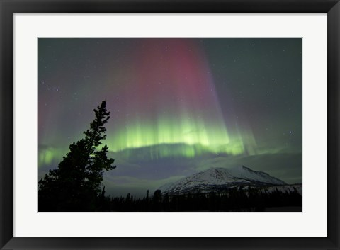 Framed Red and Green Aurora Borealis over Carcross Desert Print