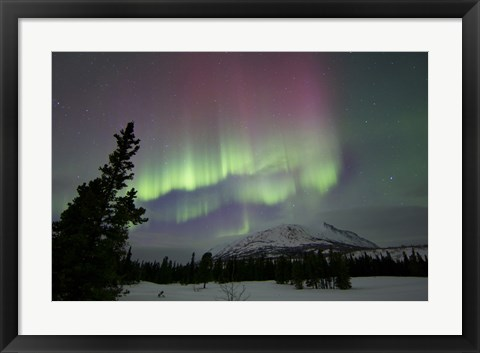 Framed Red and Green Aurora Borealis over Carcross Desert, Canada Print