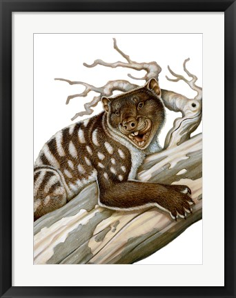 Framed Thylacoleo, a Marsupial Lion from the Pleistocene Age Print