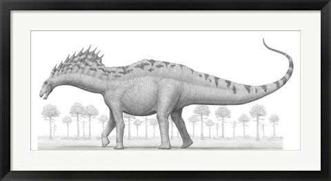 Framed Amargasaurus Cazaui Dinosaur from the Early Cretaceous Period Print