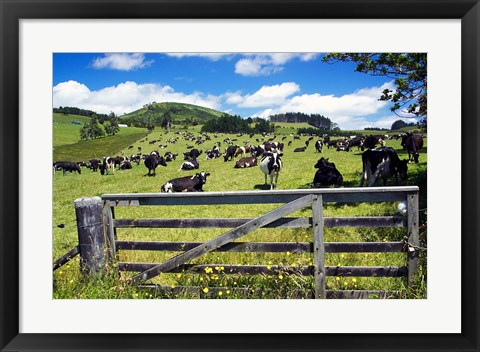 Framed Gate and Dairy Farm near Kaikohe, Northland, New Zealand Print