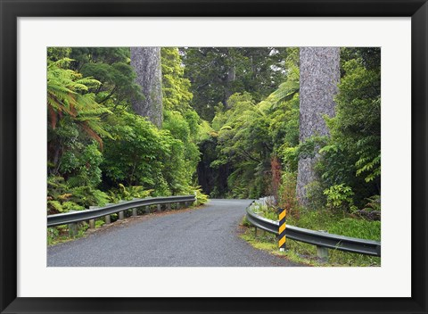 Framed Road between Kauri Trees, Waipoua Kauri Forest, Northland, New Zealand Print