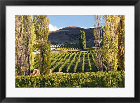 Framed Felton Road Vineyard, Bannockburn, South Island, New Zealand Print
