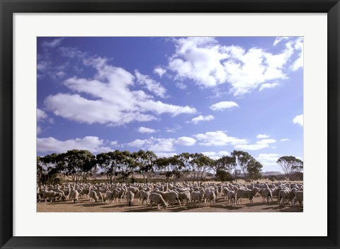 Framed Sheep Station, Kangaroo Island, South Australia, Australia Print