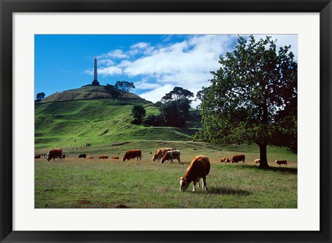 Framed Cows, One Tree Hill, Auckland Print