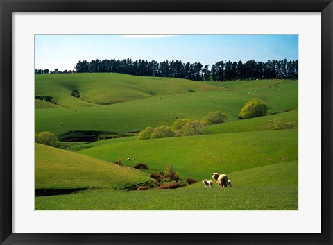 Framed Farmland Near Clinton, New Zealand Print