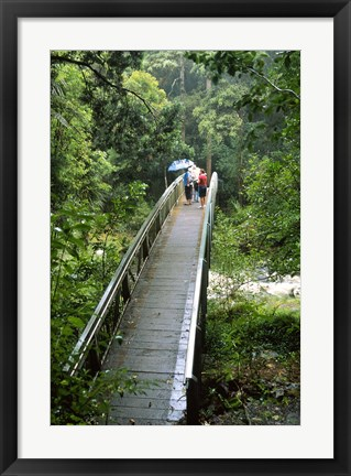 Framed Bridge Below Whangarei Falls, Northland, New Zealand Print