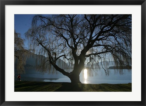 Framed Willow Tree, Lake Wanaka, Wanaka, South Island, New Zealand Print
