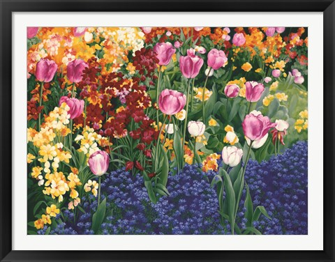 Framed English Tulips Print