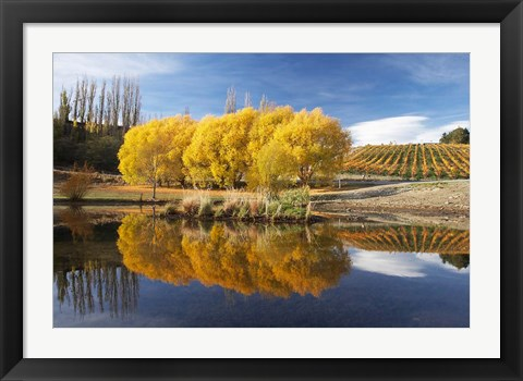 Framed Autumn Vineyard, Bannockburn Inlet, Lake Dunstan, Central Otago, South Island, New Zealand Print