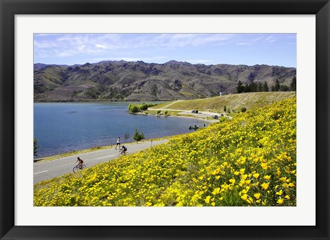 Framed Californian Poppies and Cyclists, Lake Dunstan, South Island, New Zealand Print