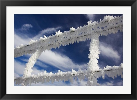 Framed Frosty Wire Fence, Otago, South Island, New Zealand Print