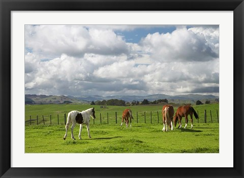 Framed Horses, Farmland, Te Kauwhata, North Island, New Zealand Print