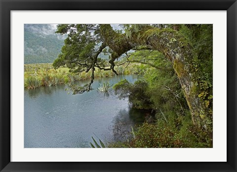 Framed Mirror Lakes, Milford Road, Fiordland, South Island, New Zealand Print