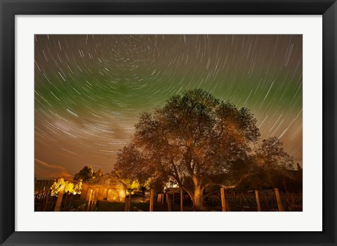 Framed Star Trails Over Walnut Tree, Domain Road Vineyard, Central Otago, South Island, New Zealand Print
