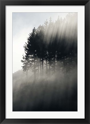 Framed Early Morning Mist and Trees, State Highway 4 near Wanganui, North Island, New Zealand Print