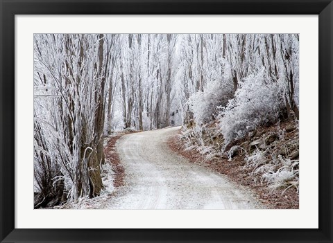Framed Hoar Frost and Road by Butchers Dam, South Island, New Zealand (horizontal) Print