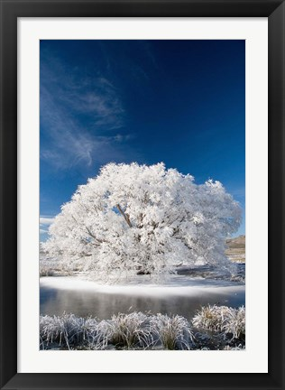 Framed Hoar Frost on Willow Tree, near Omakau, Central Otago, South Island, New Zealand Print