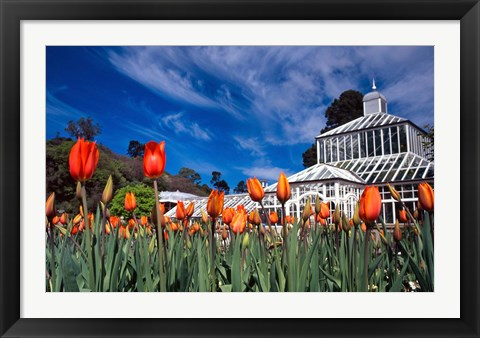 Framed Winter Garden, Botanic Gardens, Dunedin, New Zealand Print