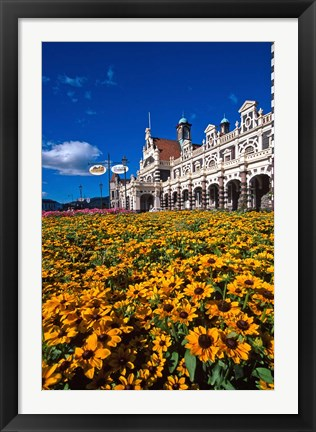 Framed Historic Railway Station and field of flowers, Dunedin, New Zealand Print