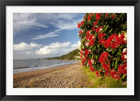 Framed Beach, Pohutukawa, Thornton Bay, No Island, New Zealand Print