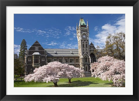 Framed Clock Tower, Historical Registry Building and Spring Blossom, University of Otago, South Island, New Zealand Print