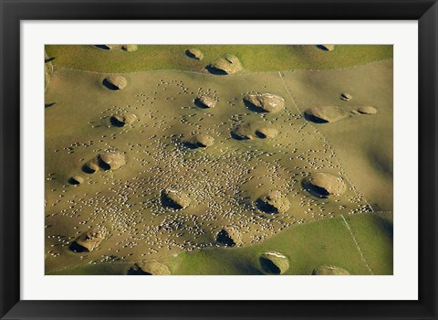 Framed New Zealand, South Island, Sinkholes, Sheep, Agriculture Print