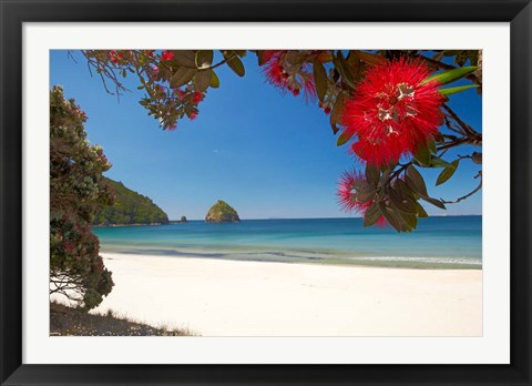 Framed Pohutukawa Tree in Bloom and New Chums Beach, North Island, New Zealand Print